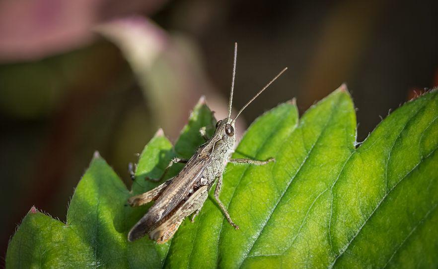 Bio-based producten en insectenteelt met reststromen