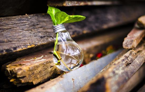 Hoe creëert u nieuwe business en inkomsten in een biobased economy?